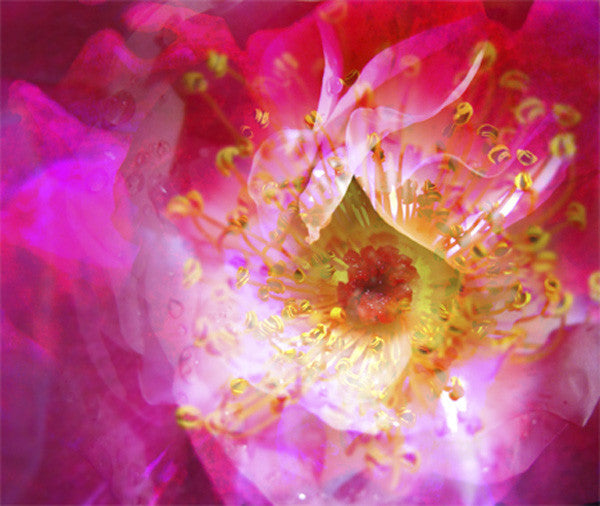 Rosy Glow Photo Montage on  24