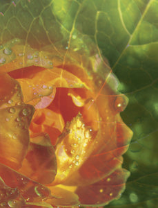"Rose Leaf photo montage print on gallery-wrapped canvas, 18"" w x 24"" h, ready to hang"