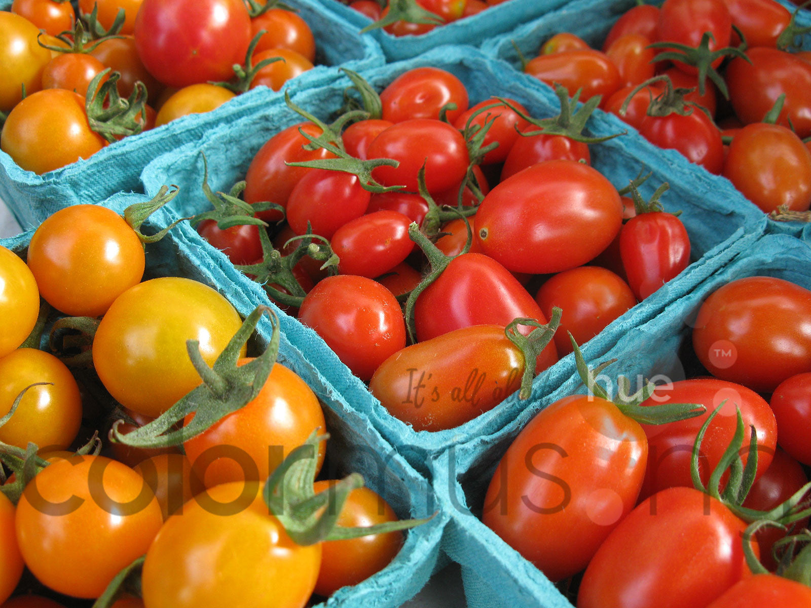 Market Tomatoes II Color Palette: Downloadable Editable PSD/JPEG Files