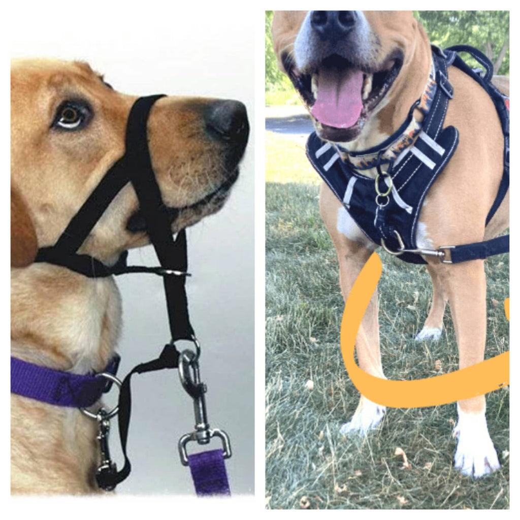 Head Halter or Front Clip Harness - which one is best?