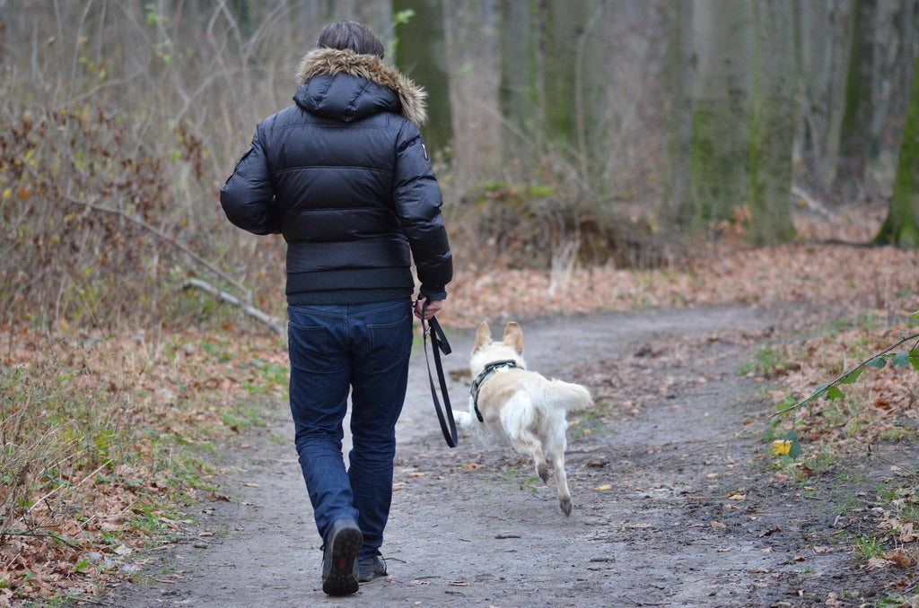 Running With Your Dog - What You Need To Know