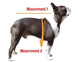 dog measurements for coats