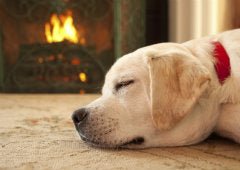 dog heating up by fireplace