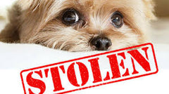 dogs are being stolen