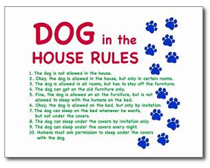 rules and engagement for dogs