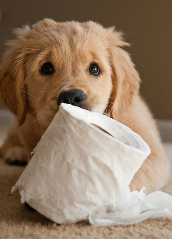 dog with toilet roll