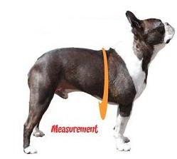 measurment for dog harness chest only