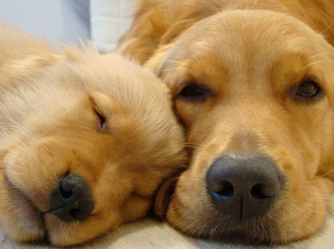 puppy-with-mum