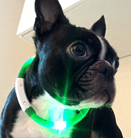 LED flashing dog collar worn by dog