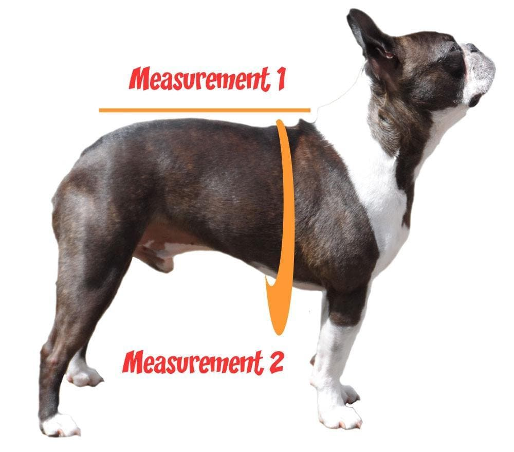 how to measure your dog around the chest and neck to tail