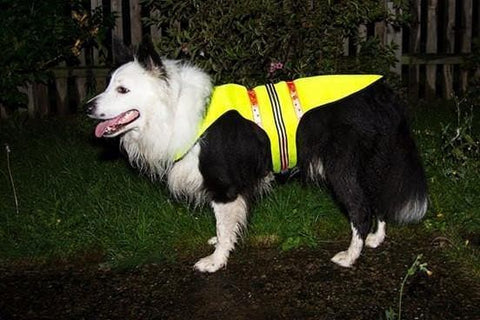 showing side fit of led dog vest