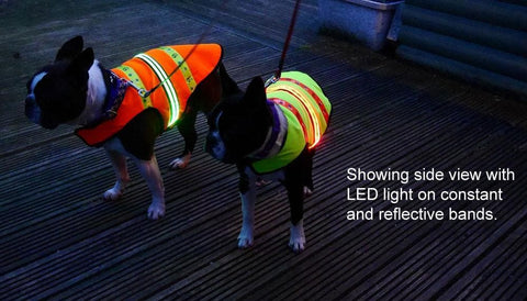 two dogs wearing flashing LED dog coats