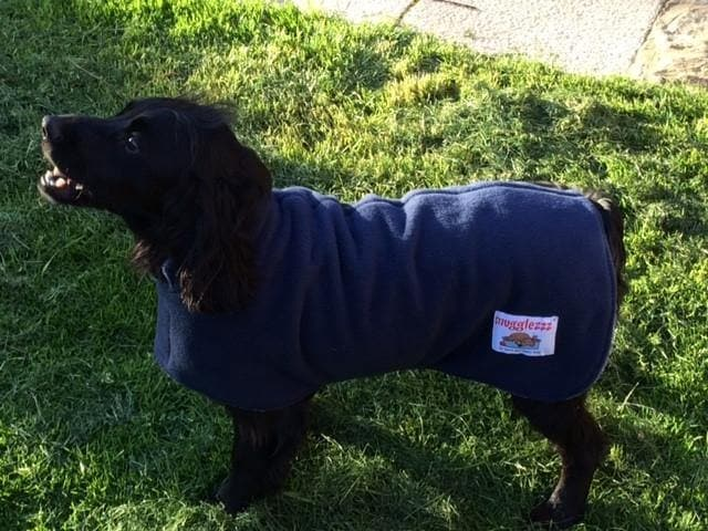 medium blue dog coat to fit small springer spaniel