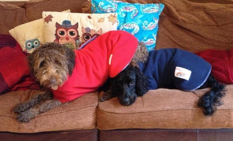 two dogs getting dry in a red and blue dog drying coat