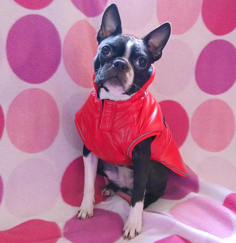 red waterproof dog coat with chest coverage