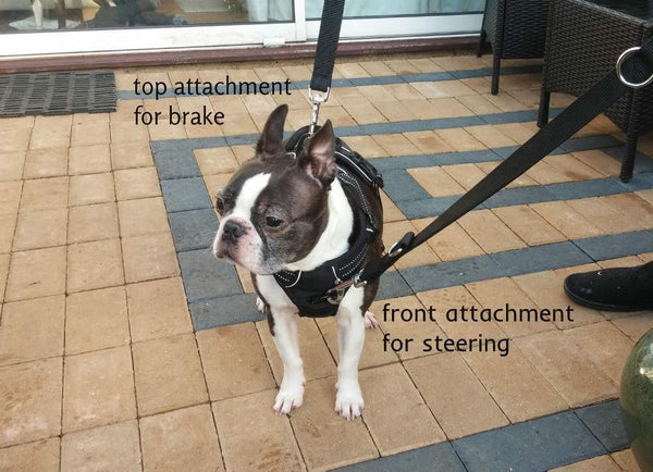 Double Ended Dog Lead For No Pull Dog Harness