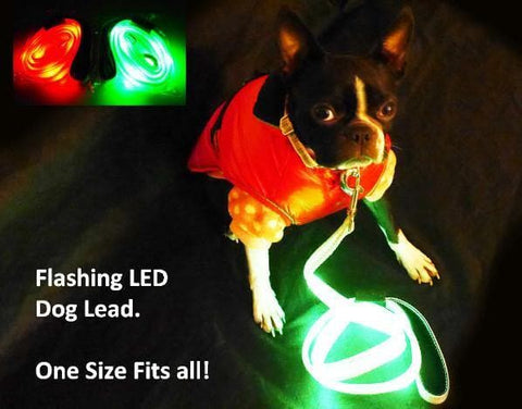 boston terrier with green high viz dog lead