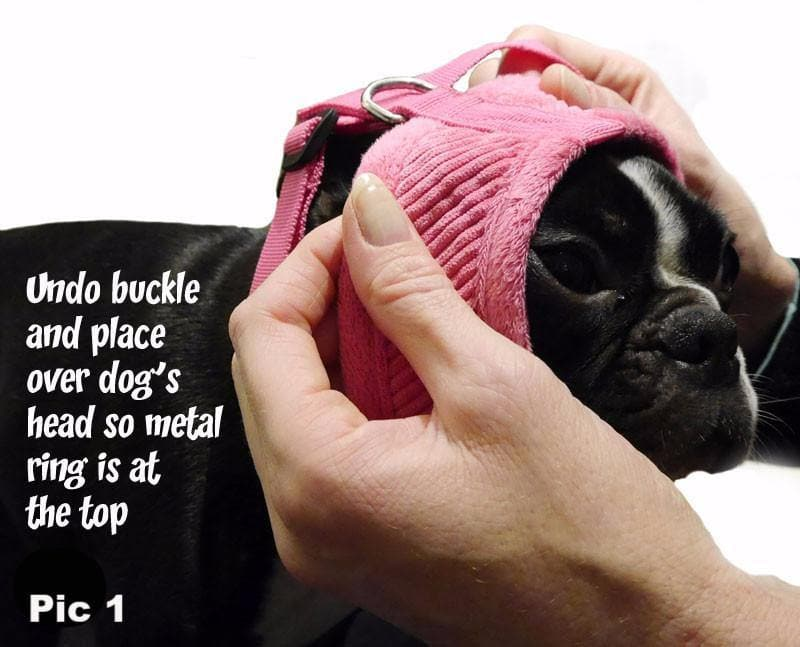 place dog harness over the head