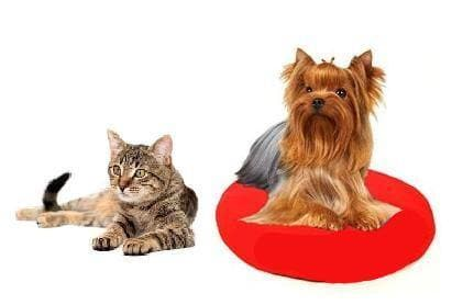 heat mat for cats and small dogs