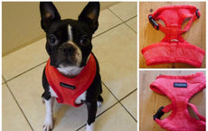 Extra Soft Dog Harness For Smaller Dogs