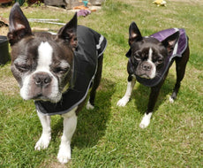 Light Waterproof Dog Coat In Black and Purple With Harness Hole
