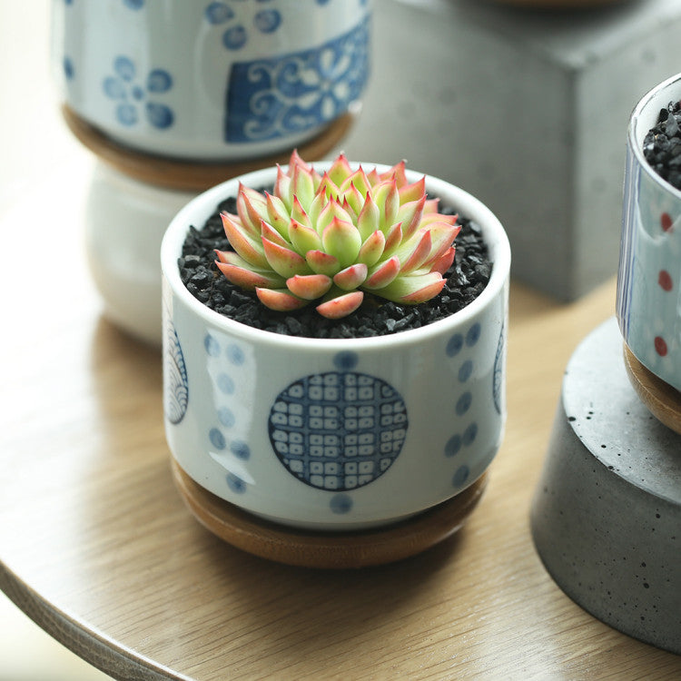 """Graphic"" planters with bamboo trays"