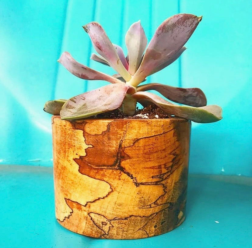 Wood Planter in Spalted Pecan