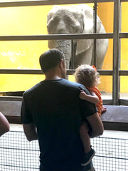 dad holding daughter in front of an elephant enclosure