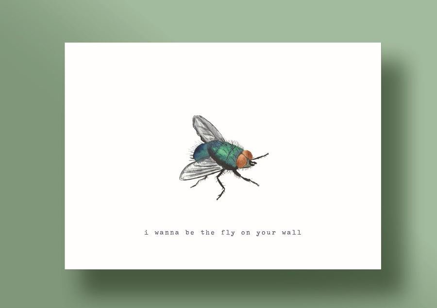 The fly on your wall
