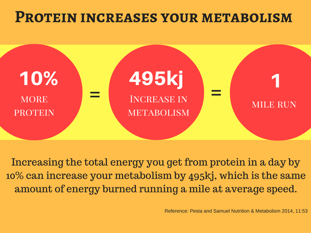 Protein increases your metabolism
