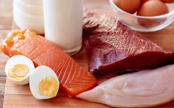 Protein Increases Metabolism