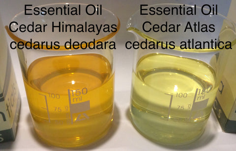 Cedarwood Essential Oil Himalayan