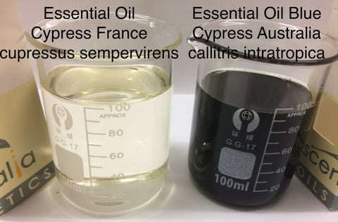 Cypress Essential Oil France <br><i><small>cupressus sempervirens </small></i></br>