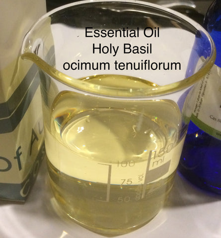 Basil (Holy) Essential Oil <br><i><small>ocimum tenuiflorum</small></i></br>