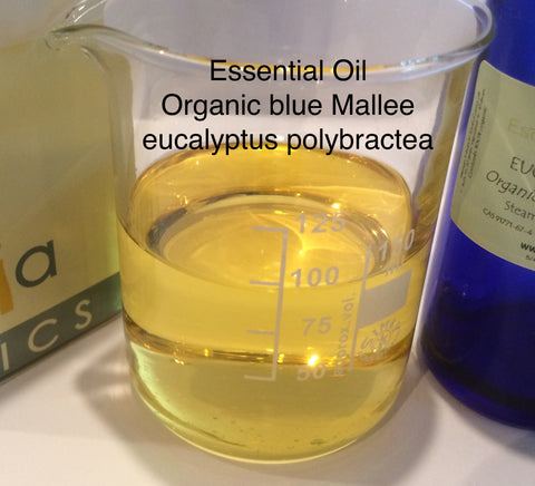 Eucalyptus Blue Mallee Essential Oil Organic <br><i><small>polybractea</small></i></br>
