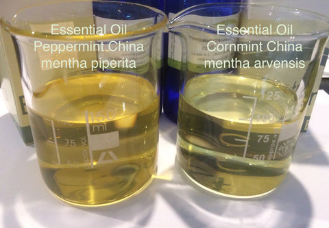 Peppermint Essential Oil China <br><i><small>mentha piperita </small></i></br>