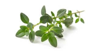 Thyme White Essential Oil <br><i><small>thymus vulgaris</small></i></br>