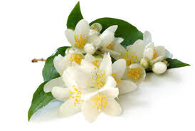 3% Jasmine Absolute   3% jasminium grandiflorium and 97% Jojoba