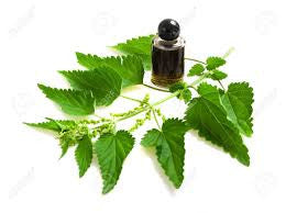Nettle  Organic Botanical Extract February Special