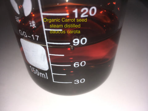 Organic carrot seed oil caucus carota steam distilled