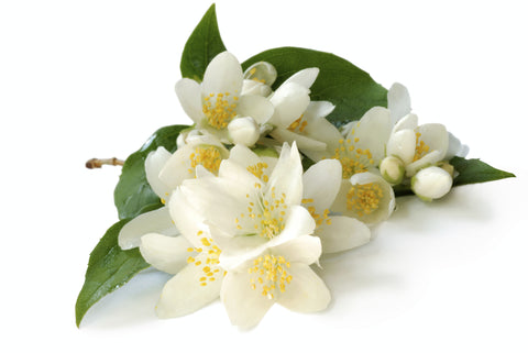 Jasmine Absolute 3% <br><i>jasminium sambac</i></br> and 97% Jojoba