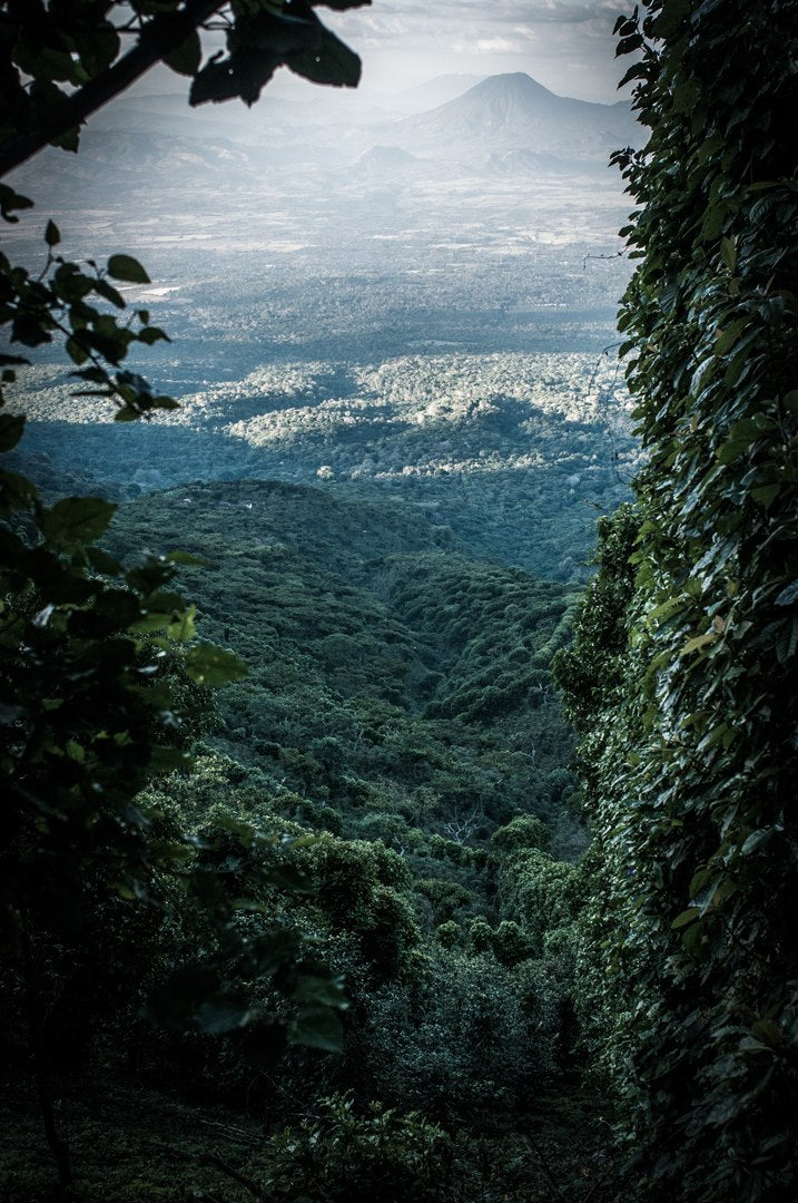 ISIDOR BATLLE'S FINCA LAS NUBES NATURALLY PROCESSED BOURBON
