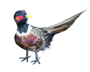 Feather Pheasant Decoration