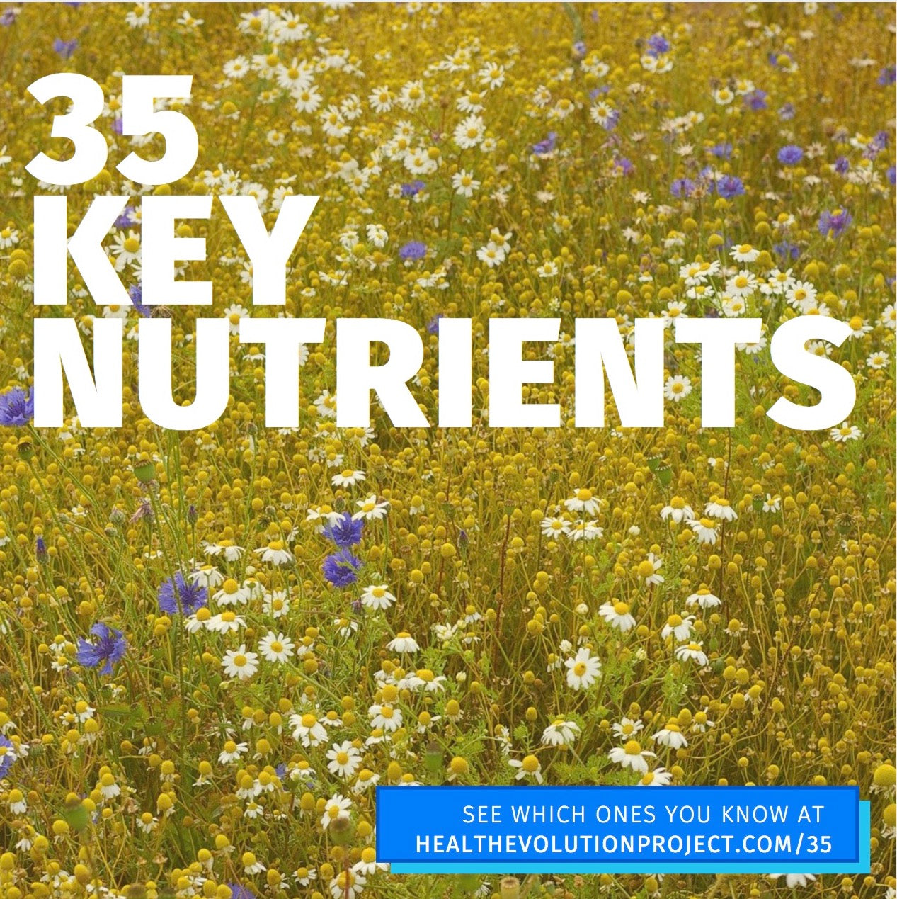 Why 35 key nutrients make such a massive difference