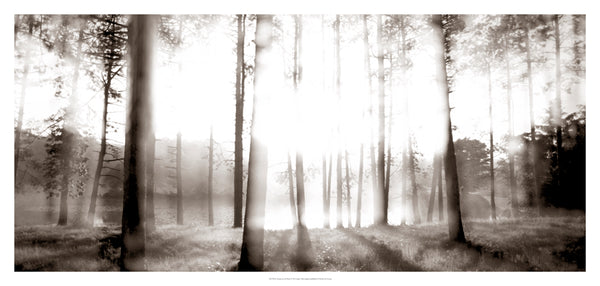 Sunrise in the Pines Photo Print