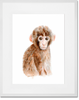 Curated Nest: Nurseries and Design - Safari Baby Monkey Portrait - Art