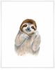 Safari Baby Sloth Portrait