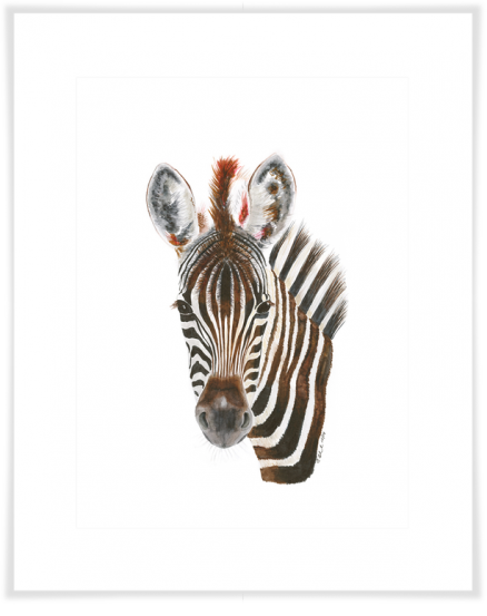 Safari Baby Zebra Portrait