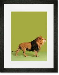 Lion Photoshoot Print