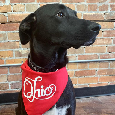 Fancy Ohio Dog Bandana - Jupmode